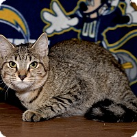 Adopt A Pet :: Tiny - Medina, OH