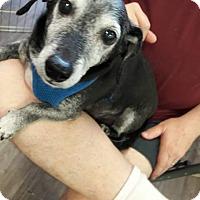 Adopt A Pet :: Gabel - Henderson, NV