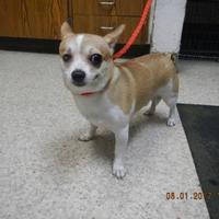 Adopt A Pet :: Donny - Pasco, WA