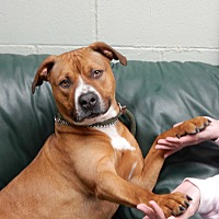 Adopt A Pet :: Kent - Long Beach, NY