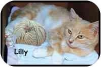 Domestic Shorthair Cat for adoption in Merrifield, Virginia - Lilly