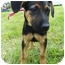 Photo 2 - Shepherd (Unknown Type) Mix Puppy for adoption in Detroit, Michigan - Vida-adopted!