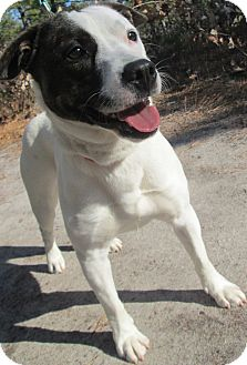 Terrier (Unknown Type, Medium) Mix Dog for adoption in Forked River, New Jersey - Mickey