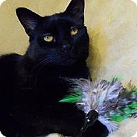 Adopt A Pet :: Coyote - Spencer, NY