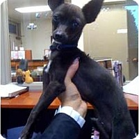 Adopt A Pet :: Homer - Fowler, CA