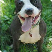 Adopt A Pet :: Janie - Chicago, IL