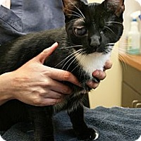 Adopt A Pet :: Oscar - Secaucus, NJ