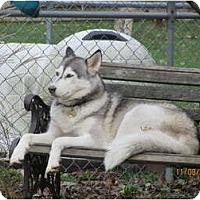 Adopt A Pet :: Xena--Pending! - Belleville, MI