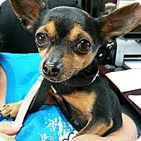 Adopt A Pet :: Yoyo - Los Angeles, CA