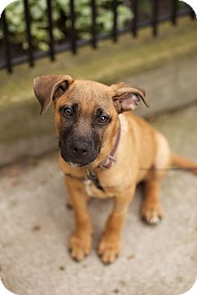 Shepherd (Unknown Type) Mix Dog for adoption in Chicago, Illinois - Xander