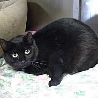 Adopt A Pet :: Dakota - Lunenburg, MA