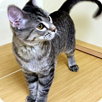 Adopt A Pet :: Michonne - Edmond, OK