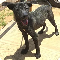 Border Collie Mix Dog for adoption in Livingston, Texas - Kalb