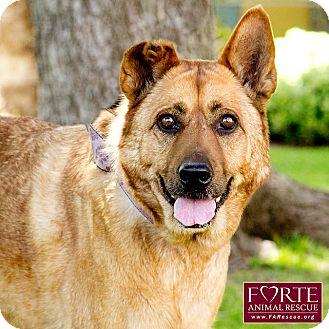 Shepherd (Unknown Type) Mix Dog for adoption in Marina del Rey, California - Geisha
