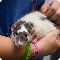 Adopt A Pet :: Lucian - Wichita, KS