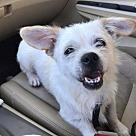 Adopt A Pet :: Merlin