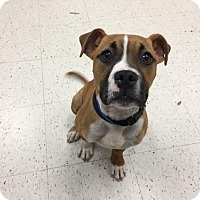 Adopt A Pet :: Larry - Rochester, NY