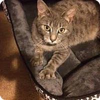 Adopt A Pet :: Pearl - Quail Valley, CA