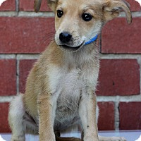 Adopt A Pet :: Dopey - Waldorf, MD