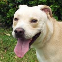 Adopt A Pet :: Tanner - Englewood, FL