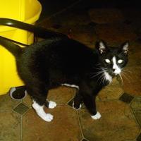 Adopt A Pet :: Sweets - Hopkins, SC