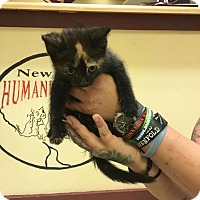 Adopt A Pet :: Popsicle - Fayetteville, WV