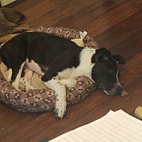 Adopt A Pet :: Hermes - Hagerstown, MD