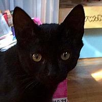 Adopt A Pet :: Dinghy - Fairport, NY
