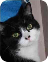 Domestic Shorthair Cat for adoption in Belleville, Illinois - Dexter