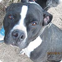 Adopt A Pet :: Panda - Littlerock, CA