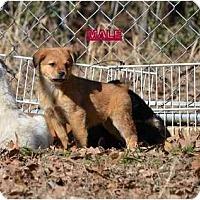Adopt A Pet :: bolton - New Boston, NH