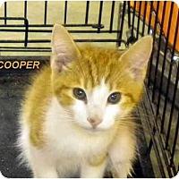 Adopt A Pet :: Cooper - Jacksonville, FL