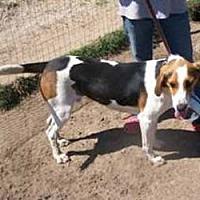 Adopt A Pet :: Repo - Seguin, TX