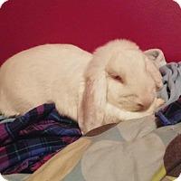 Adopt A Pet :: Stella and Precious - Conshohocken, PA