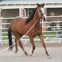 Adopt A Pet :: Boone - Las Vegas, NV