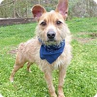 Adopt A Pet :: Angus - Mocksville, NC