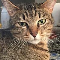 Adopt A Pet :: Annie - Southlake, TX