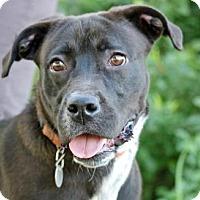 Adopt A Pet :: ONIX - Fernandina Beach, FL