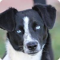 Adopt A Pet :: DORA - San Pedro, CA