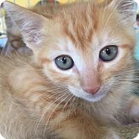 Adopt A Pet :: Samy - Encinitas, CA