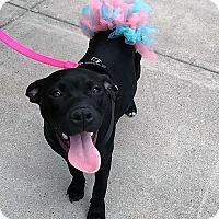 Adopt A Pet :: Cupid - Wichita Falls, TX