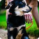 Adopt A Pet :: Dante (Needs foster)