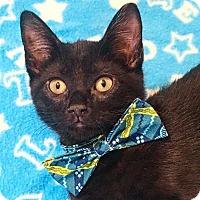 Adopt A Pet :: AJ - Duluth, GA
