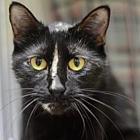 Adopt A Pet :: Penny170468 - Atlanta, GA