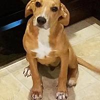 Adopt A Pet :: Bucky (Adoption Fee $50) - Newark, DE