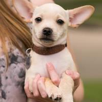 Adopt A Pet :: Henry Turner - Santa Fe, TX