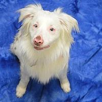 Adopt A Pet :: Sissy - Portland, OR