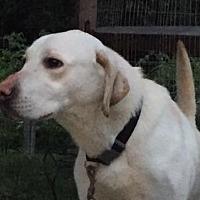 Adopt A Pet :: Jax - Pottstown, PA