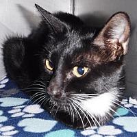 Adopt A Pet :: Melody - Redding, CA