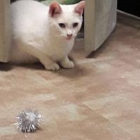 Adopt A Pet :: Casper - Baltimore, MD